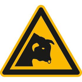 Warnschild Warnung vor Stier